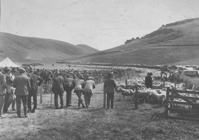 Rosebery (Sheep) Clearing sale, 1930