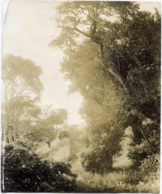 The back road to Moeraki.