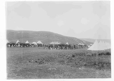 Camp at Kuriheka, North Otago Mounted Rifles c.1891-95
