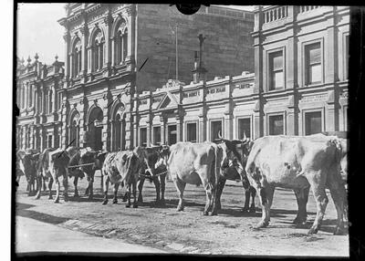 Bullocks on Tyne Street