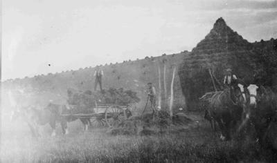 Bortons Harvesting Scene, 1920.; 867P