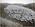 1800 Lambs, Heathfield