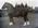 Clydesdale horse at Elderslie Estate