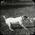 Dog with dead hare. Elderslie Estate