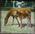 Horse and foal. Elderslie Estate
