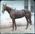 Horse at stables. Elderslie Estate