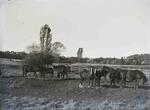 Horses.  Elderslie Estate