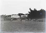 Horses at Elderslie Estate