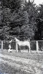 Girl and boy with horse. Elderslie Estate