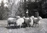 Unidentified woman with sheep. Elderslie Estate