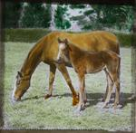 Horse and foal. Elderslie Estate