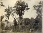 Bush scene, Otago