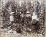 Four women harvesting hops