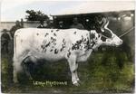 Lena of Haydowns.