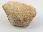 Limestone with Bryozoan Fossils